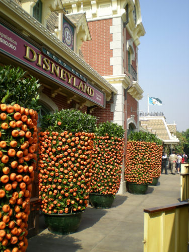 Hong Kong Disneyland at Chinese New Year
